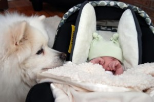 bebe-chien-mere-et-monde